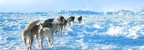 背景边框顶栏用雪景图片 - suihuashifan - 绥化师专政治七九级博客