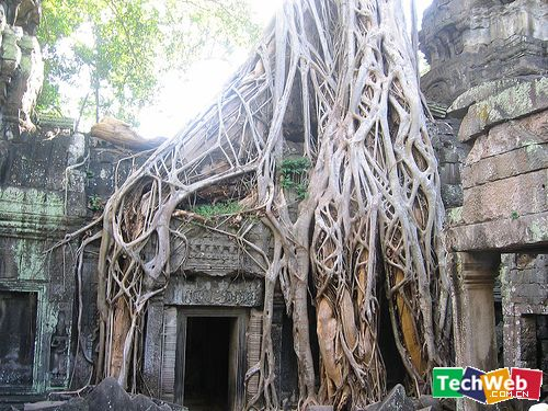 全球10大最奇伟的树(组图) - 原上飞 - 原上飞的博客