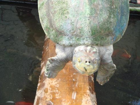 十大珍稀淡水龟鈥斺斍5位