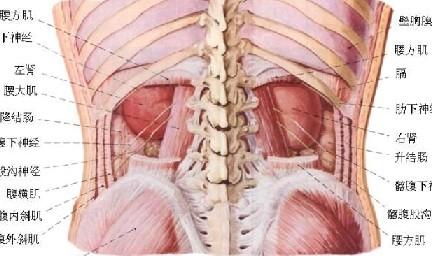 自己拍打治百病:常用拍打部位图示及解说