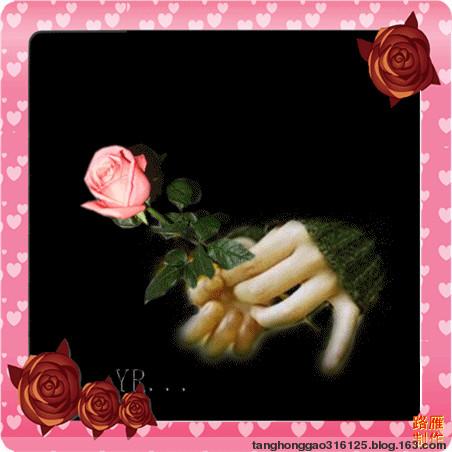 玫   瑰 - 汤洪高 - 汤洪高个人主页