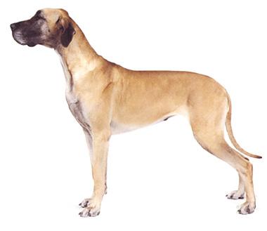 引用 引用 世界名犬大全 - kuailenv.ren123 - kuailenv.ren123博客