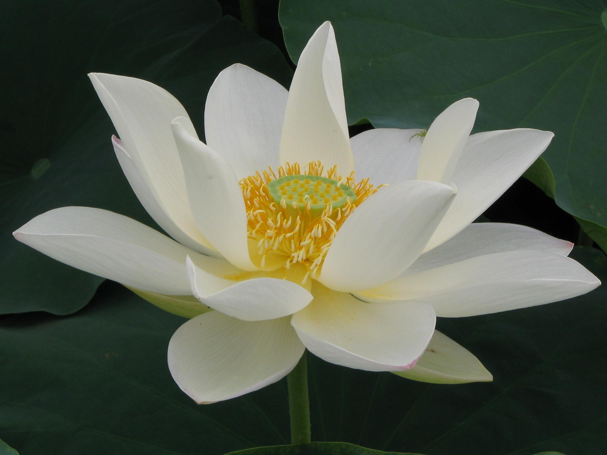 绿度母咒 - 春兰之馨香 - 香光庄严卍念佛三昧