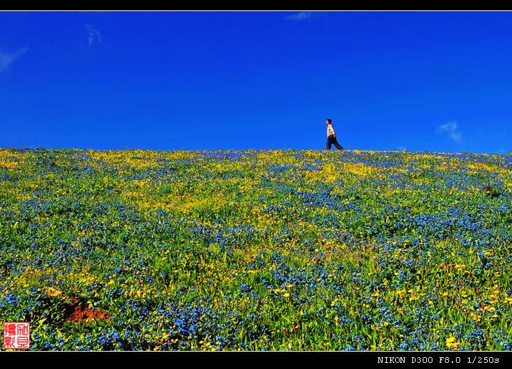【引用】【原创摄影】七月玉树花如海(16P) - 心灵 - 心灵的自留地