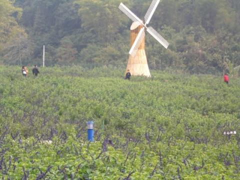 德庆盘龙峡--单身之旅 - 香草味可乐 - 香草味可乐