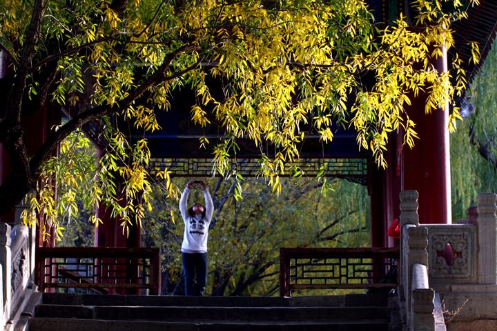 (原创摄影)柳树秋黄 - 刘炜大老虎 - liuwei77997的博客