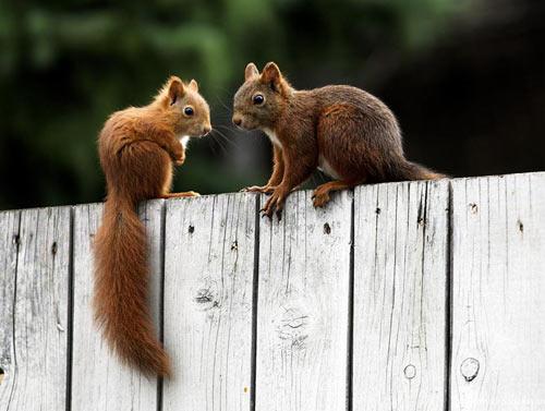 出双入对的动物情侣