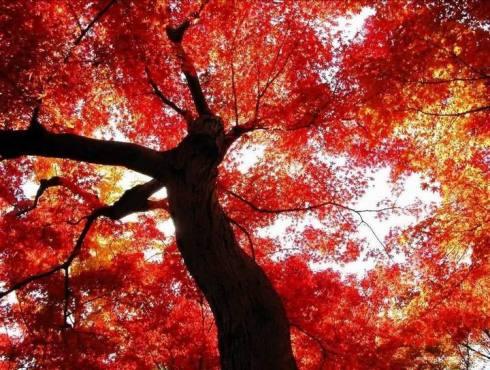 秋色 (组图) (二) - 老藤 - tengxuyan 的博客