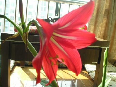 [原创]屋里屋外的花开了,春天真的来了 - 挺住 - 挺且博之——挺住就是胜利!