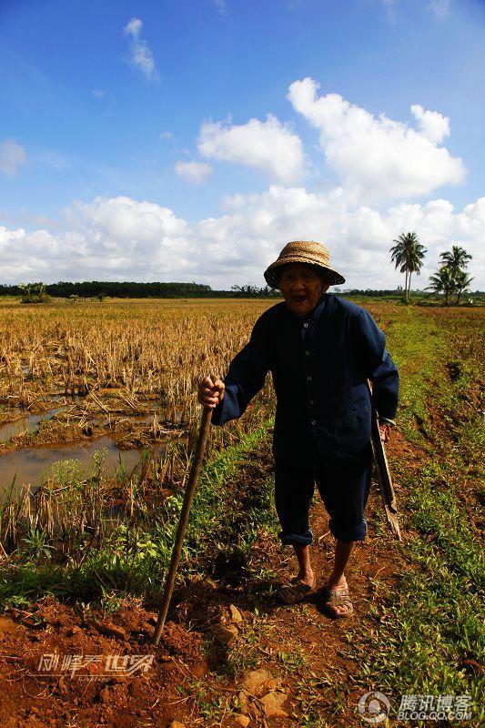 田野上走来了苍悴的阿婆 - 刚峰先生 - 天涯横呤