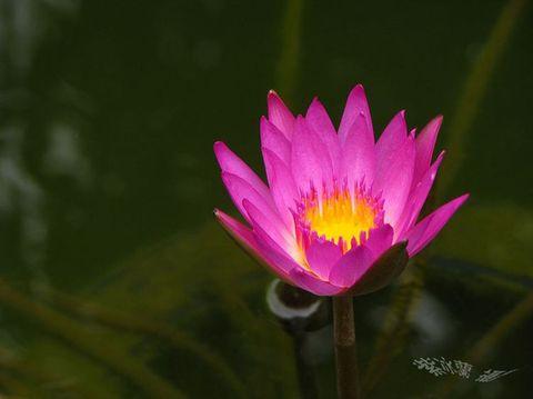 夜未眠(七绝四则) - 紫冰兰 - 莲心苑.紫冰兰