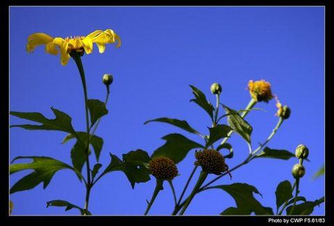 初冬的山菊花 - 空山听雨 - 空山听雨:摄影是一种力量