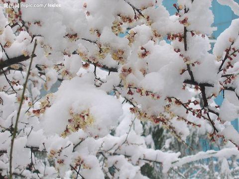 """古诗词中描写""""雪""""的佳句(一) - 己丑斋主人 - 己丑斋主人的博客"""