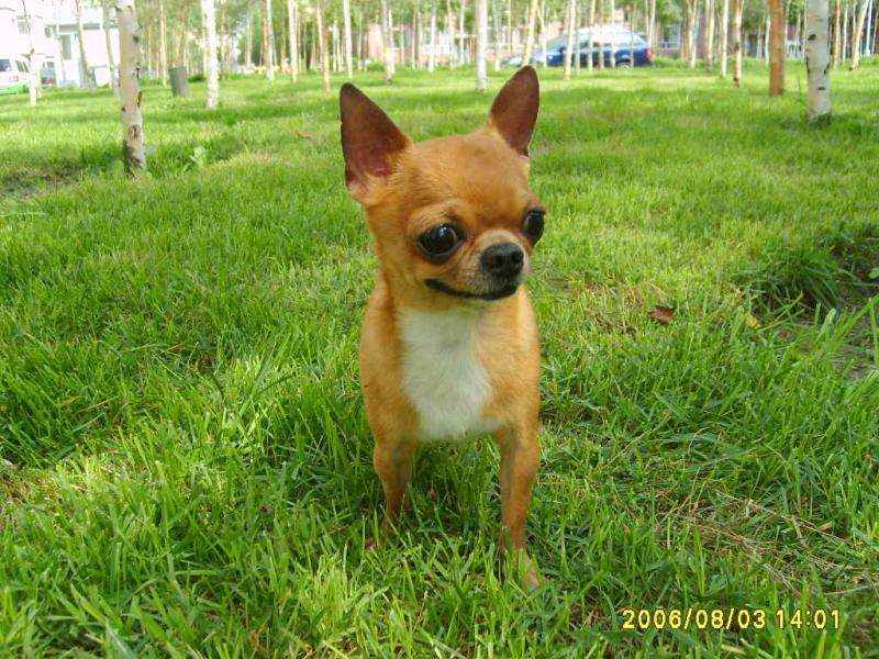 犬犬排行榜 dhlg2007 梅兰竹菊
