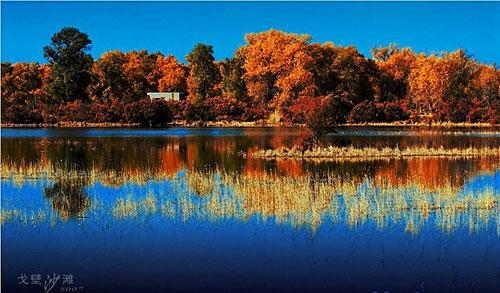 疏勒河的红柳(疏勒河的红柳原创) - 疏勒河的红柳 - 疏勒河的红柳