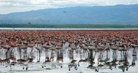 肯尼亚东非裂谷游 - 淡淡云天 - 淡淡云天
