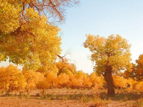 疏勒河的红柳  —兴华互唱 - 兴华 - 大漠雄鹰
