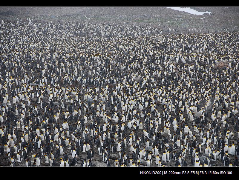 南极(十二) - 海阔山遥 - .