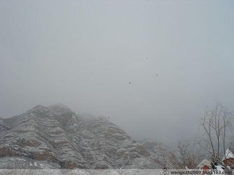 2008年12月19日 - 桃源居士 - 桃源居