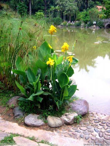 原创热带植物(兰州园丁摄于版纳热带植树园) - 兰州园丁ljm44713 - 我的博客原创照片,欢迎指导