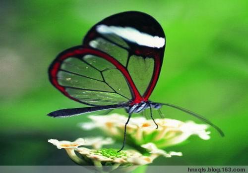 引用  蝴蝶翩翩飞 - hengdaxie - 享受生活,开心每一天!