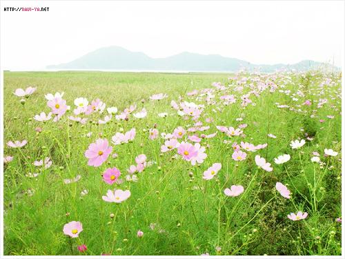《雨忆兰萍诗集》——喜相聚难忘记 - 雨忆兰萍 - 网易雨忆兰萍的博客