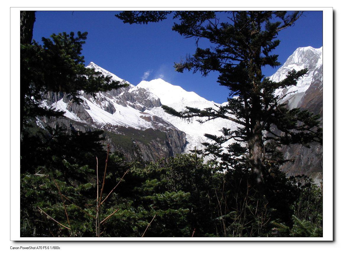 冰川舌伸原始森林6公里