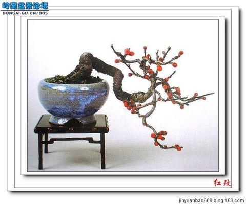 中国盆景图片4原创 - 金元宝 - 金元宝博客