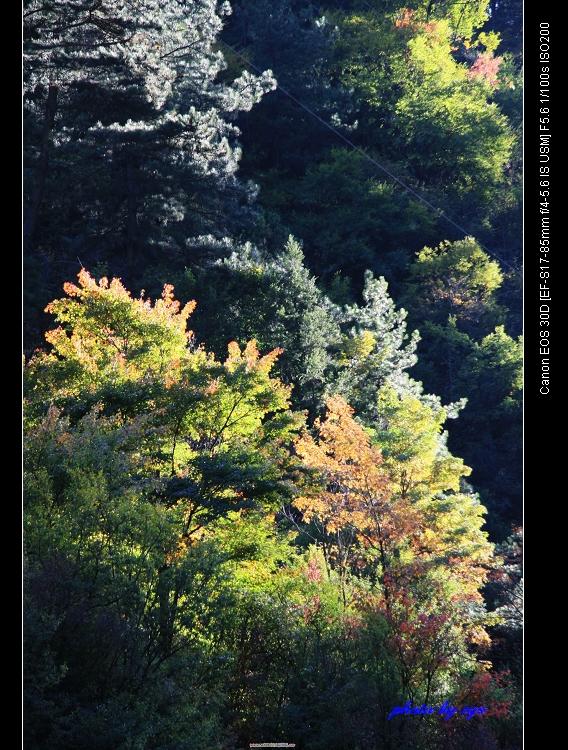 光影魔术米亚罗[原] - 自由诗 - 人文历史自然 诗词曲赋杂谈