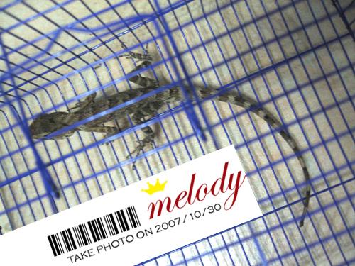 """奇遇""""便便"""" - melody.dd - 华丽的D调"""