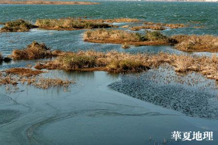 海峡两岸寻侯鸟(内地篇)-侯鸟迁徙(二) - 华夏地理 - 华夏地理的博客