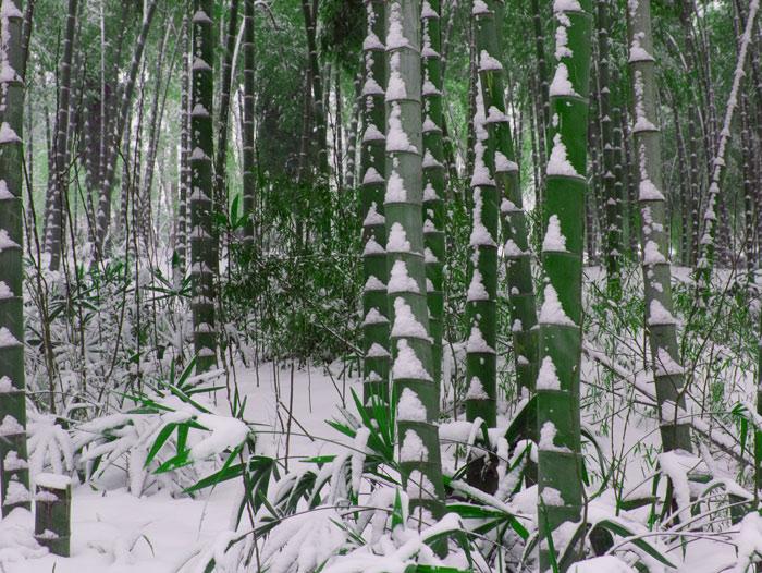 《冬竹》 - 音乐收藏 - 静坐听丝竹,沐乐洗尘心