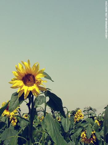 [照片]4月一点也不浪漫的物语,放松去了~ - 崇 -
