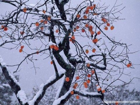 我沿着初雪漫步 作者 (俄)叶赛宁 - angel.yzx - 惠风和畅