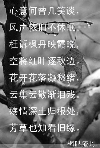 【原创】杂感 - 枫叶流丹 - 枫叶流丹的心韵
