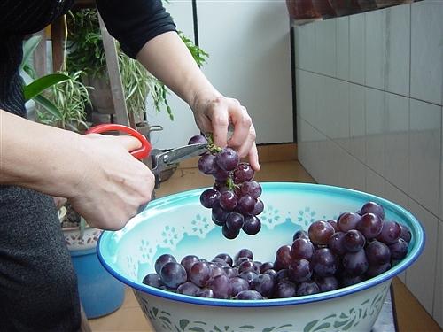 酿制葡萄酒 - 午老虎网博