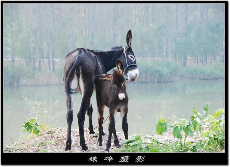 【原创】重游白河峡谷(3/4) - 珠峰 - 走南闯北