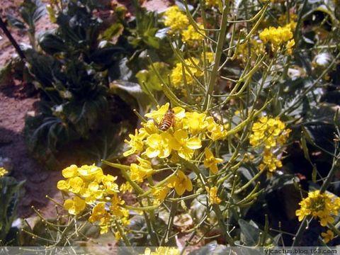 行摄手记:色影乡间 - 温柔的月色 - Cactus的博客