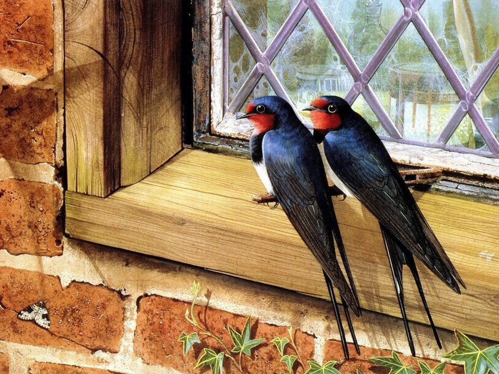 .精美图片欣赏-可爱的鸟类 -   红杏 - 红杏