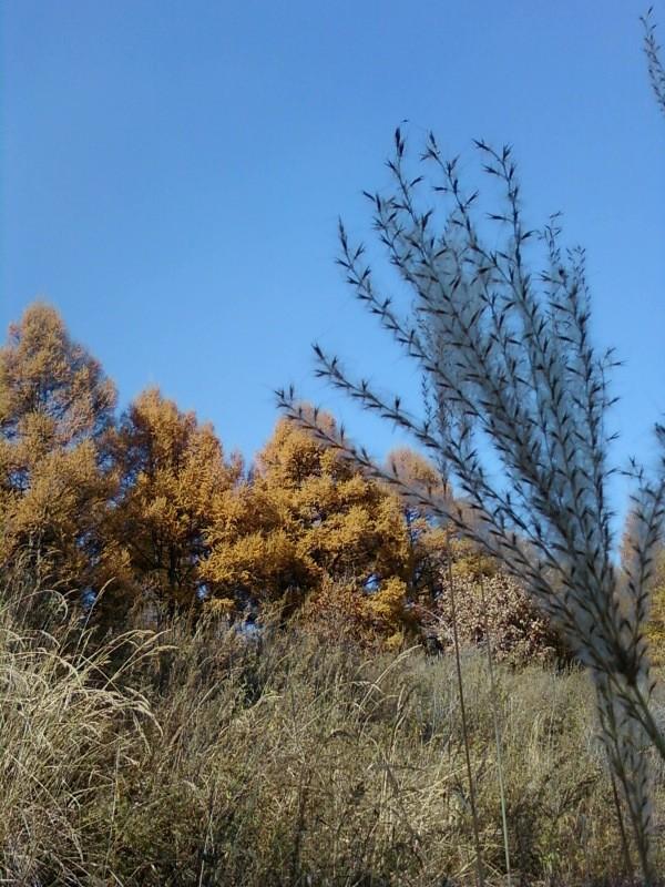 秋日再游瓦房沟 - selene - Helena的博客