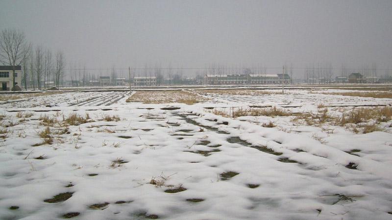 冬歌 - 绿色年华 - czljljt 的博客