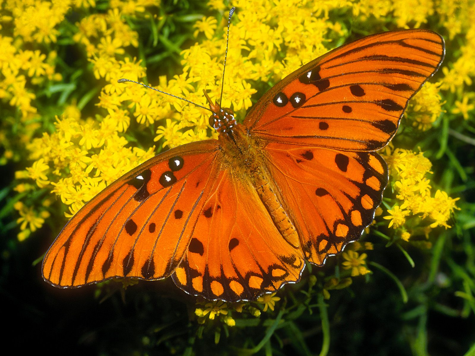 精美图片欣赏-昆虫世界 - 沉默是金 -    沉默是金博客