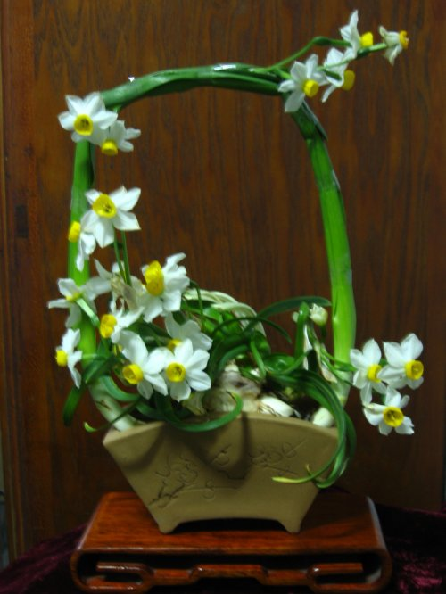 漳州市花——水仙 - wsndhy - wsndhy的博客
