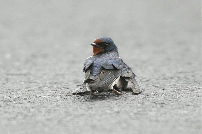 悲伤的燕子…… - 暗香盈袖 - 暗香盈袖