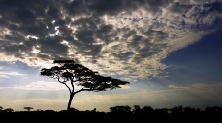 镜头记录下的多彩非洲 凝思的狮子(组图) - 中国国家地理 - 中国国家地理网的博客