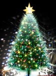 写在2009年圣诞之夜 - 红黄蓝 - 红黄蓝的家园