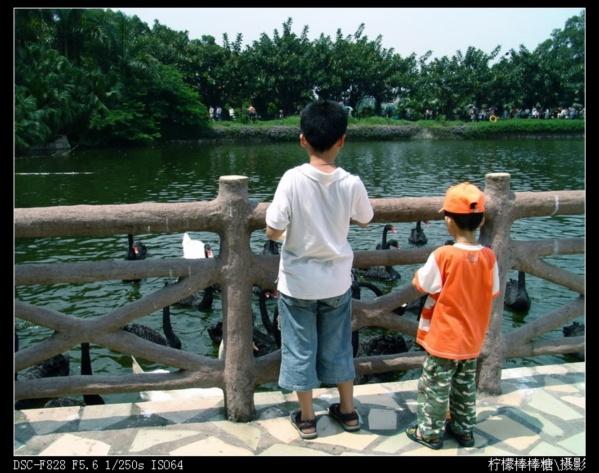 【原创】_2007五一黄金周广东行游记 - 柠檬棒棒糖 - 柠檬棒棒糖的田园