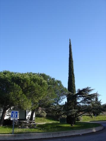 法国南部高速公路边的地中海柏树 - pfspfs666.popo - 反三的博客