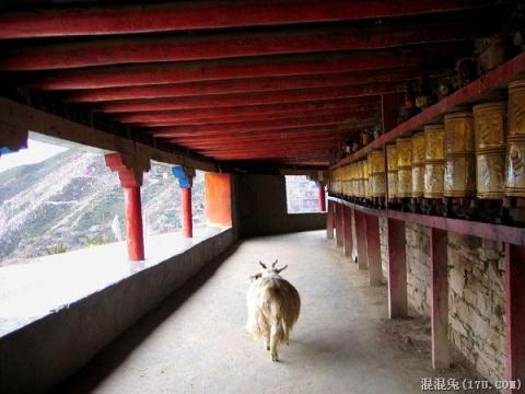 (多图片)色达喇荣五明佛学院求法生活照片总汇 - 藏传佛教 -     回向众生
