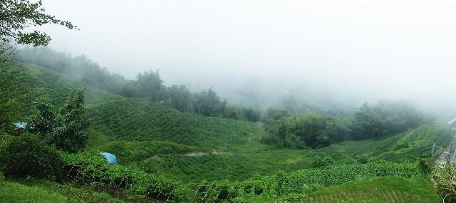 云雾林海阿里山(1)--台湾游之九 - 侠义客 - 伊大成 的博客